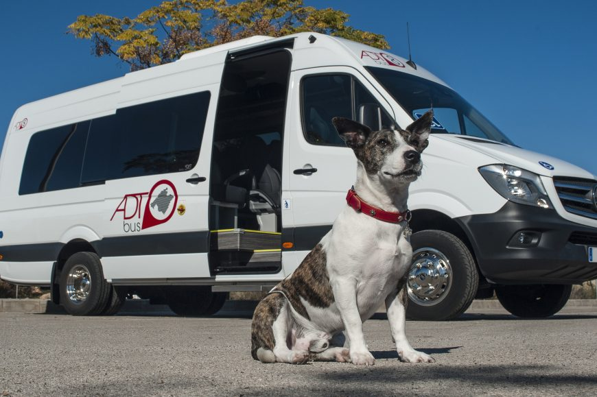 Dog Taxi Mallorca